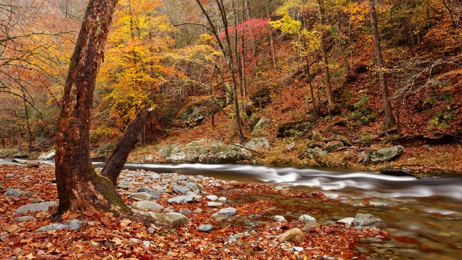 Best Time to Visit Great Smoky Mountains National Park