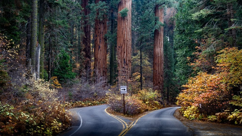Scenic Drive in Sequoia and Kings