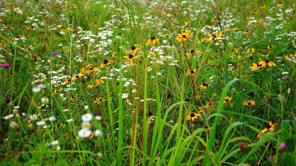 See Wildflowers in Great Smoky Mountains