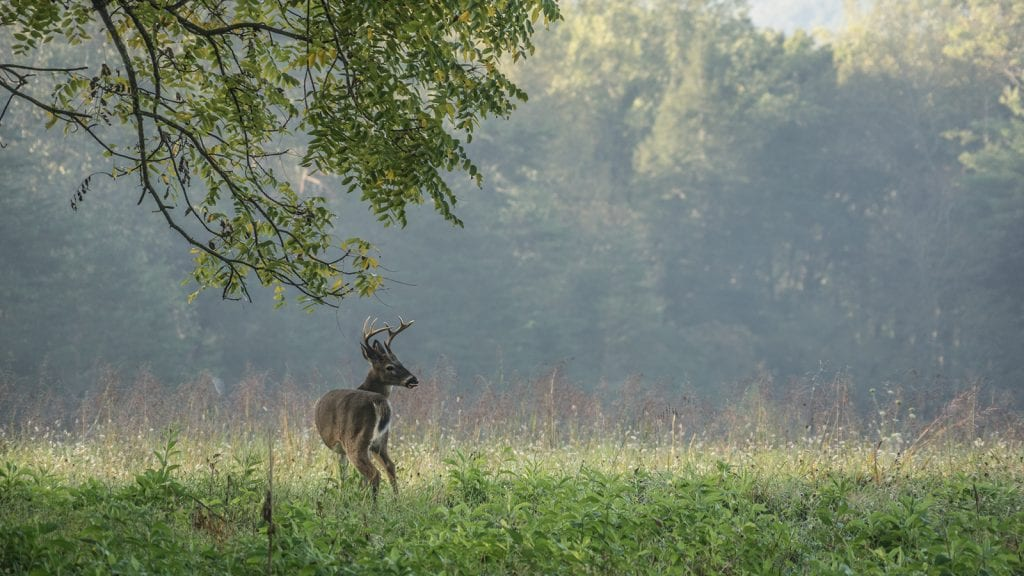 See Wildlife in Great Smoky Mountains