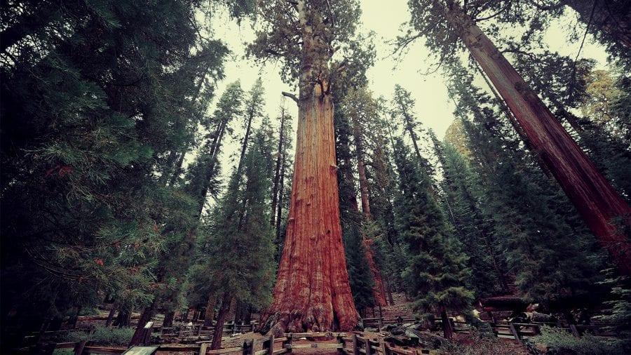 Best Things to Do at Sequoia and Kings National Park