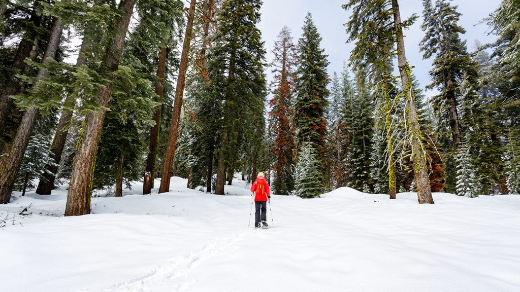 Skiing and Snowshoeing in Sequoia and Kings