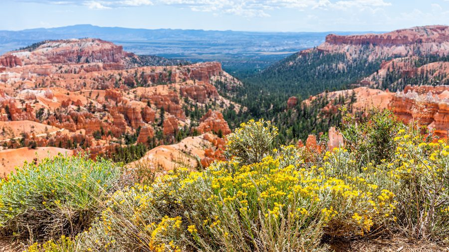 Bryce Canyon National Park - Spring