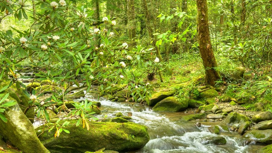 Great Smoky Mountains National Park - Spring