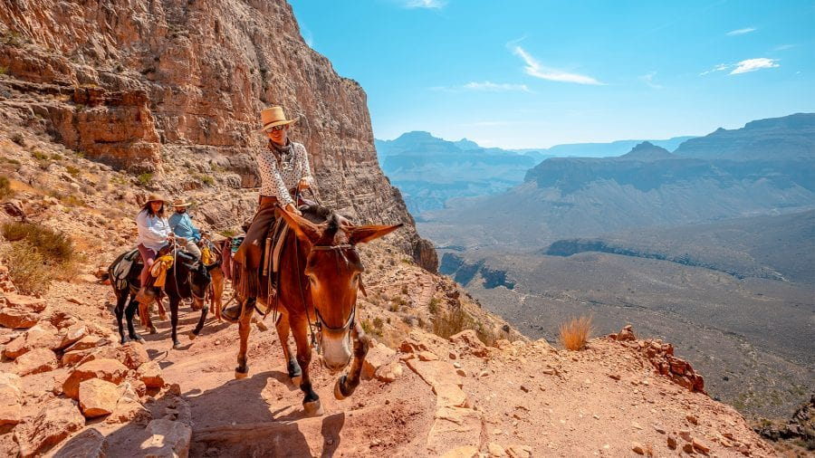 Mule Riding in Grand Canyon