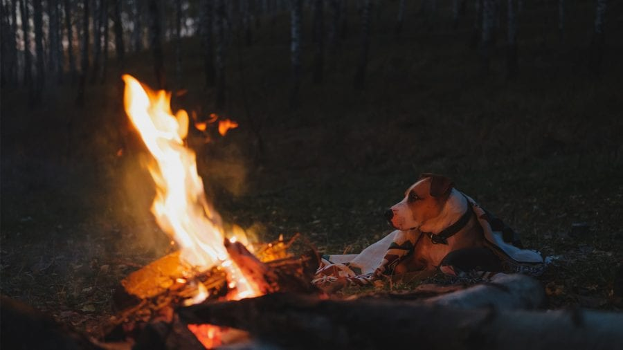 Bring the appropriate camping gear for your dog