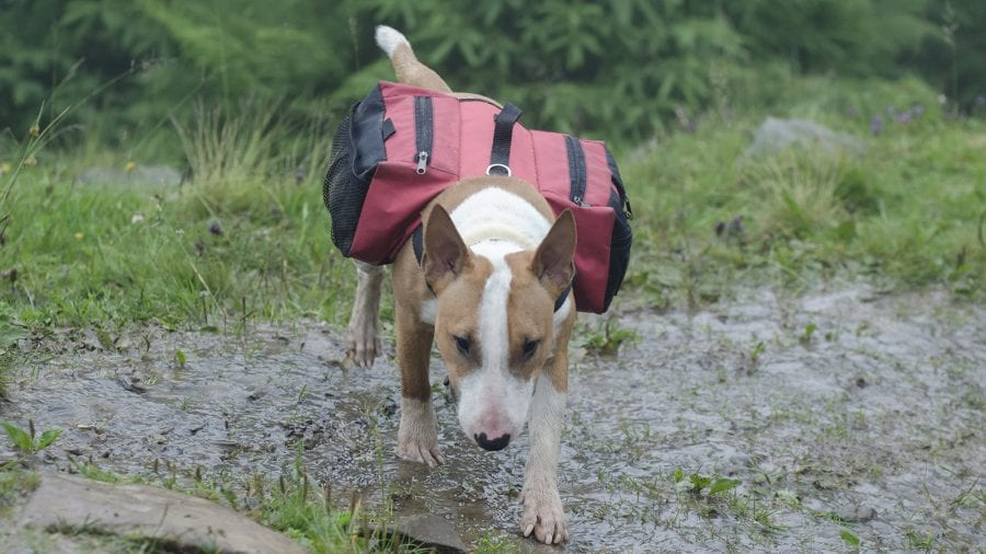Consider gearing up your pup