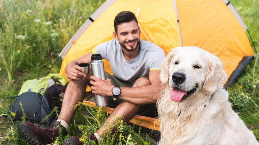 Find dog-friendly campsites and areas