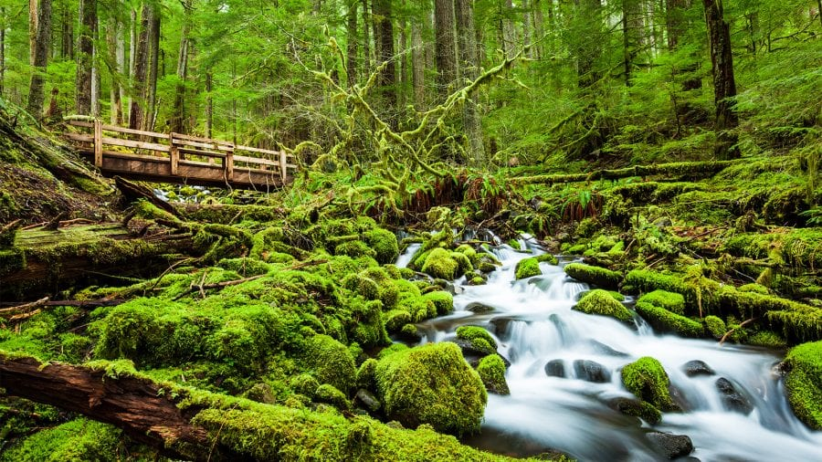 Olympic National Trail of Waterfalls