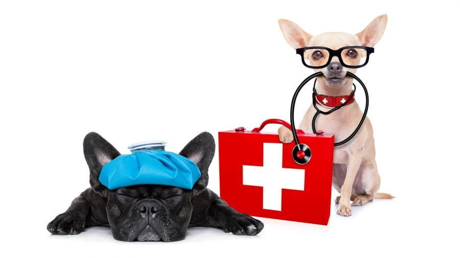 Prepare a doggie kit for outdoor emergencies (allergies and ID)