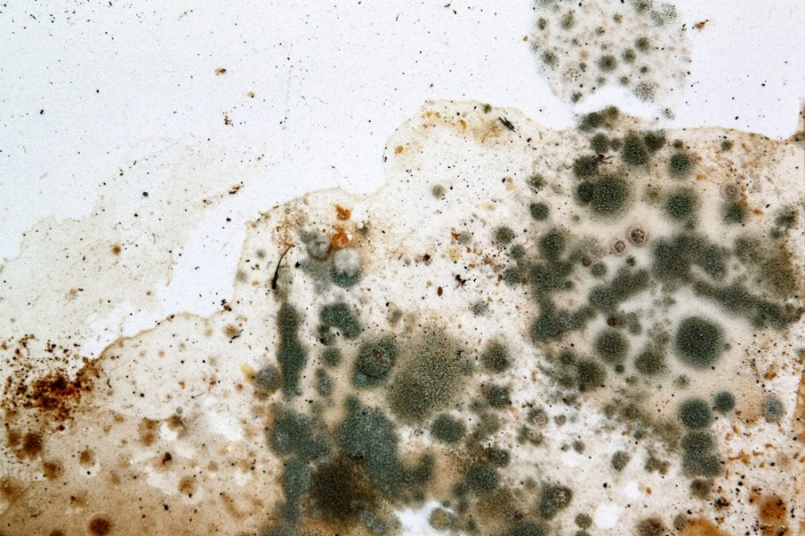 Mold on a white background