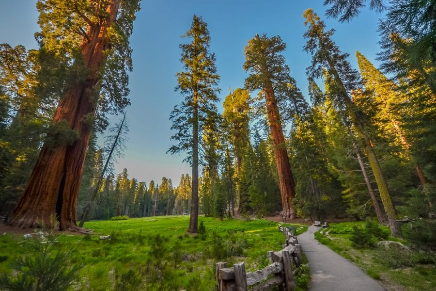 Sequoia Kings Canyon National Parks in california